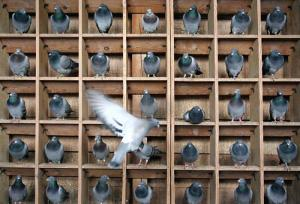If you want to be a writer, expect to be pigeonholed.
